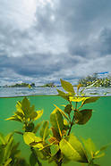 New Zealand mangroves & estuaries
