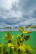 Pollen Island Marine Reserve