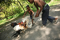 Two young boys encourage roosters to fight in Orika, the small local village on Isla Grande, one of the islands in an archipelago known as Islas del Rosario, about 35km southwest of Cartagena, on Colombia's Caribbean coast on January 2, 2009. (Photo/Scott Dalton)