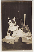 Actor in cat costume, 1920s, Shochiku Studios, silver gelatin bromide published by Oriental Photo Paper.<br />