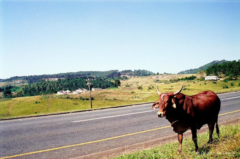 Zuid Afrikaans landschap in Zululand, provincie KwaZulu-natal, dragensberg