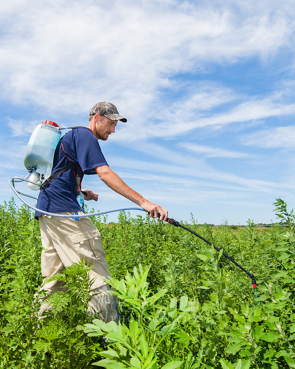 When invasive weeds are too numerous, staff and volunteers must hand–spray with an herbicide.