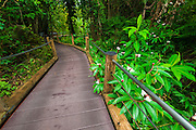 Trail at the Hawaii Tropical Botanical Garden, Hamakua Coast, The Big Island, Hawaii USA
