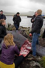 Whale + Puffin utilisation