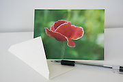 Photo flower greeting card, poppy, red bloom, petals, garden photography, paper goods, Santa Monica, west LA, California.