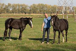 Moerings Geert, Vestha, merrie rechts<br /> Stal Moerings - Roosendaal 2018<br /> © Hippo Foto - Dirk Caremans<br /> 15/10/2018