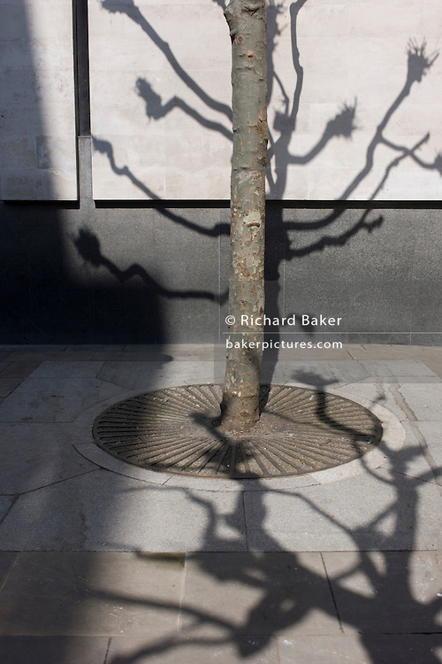 Shadows of branches from urban tree landscape in central London.