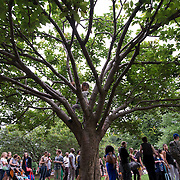June 4, 2014 - New York, NY : <br /> Erin Klein, 6, climbs a tree as her mother (not pictured) waits in line to see Janelle Monáe kick off the 2014 Celebrate Brooklyn! concert series in Prospect Park on Wednesday night.<br /> CREDIT: Karsten Moran for The New York Times