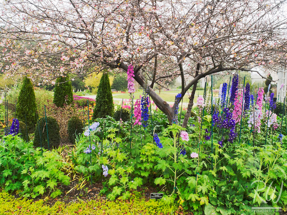 The Huntington's Shakespeare Garden in Bloom, San Marino, California