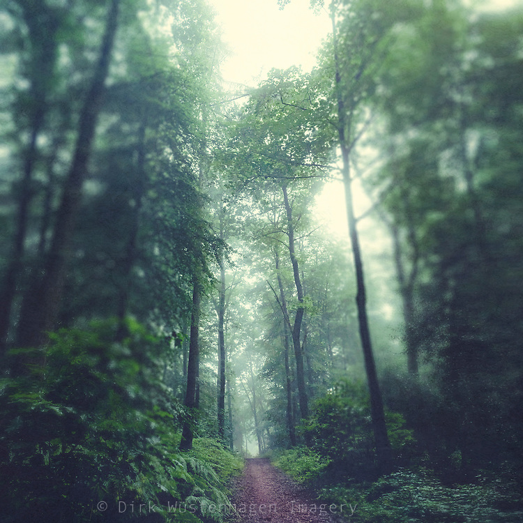 Hike through a lush forest on a misty summer morning<br /> Redbubble products: http://rdbl.co/2cMHN6u