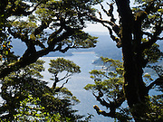 "Trees frame Lake Waikaremoana along the Panekiri Bluff trail in Te Urewera National Park, North Island, New Zealand. Published in ""Light Travel: Photography on the Go"" by Tom Dempsey 2009, 2010."