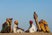 Pasturalists and their One-humped Arabian or Dromedary camels (Camelus dromedaries) in the Thar desert. Rajasthan. INDIA<br /> The camels are often imaginatively sheared and tatooed for individual identification since camels are not easy to distinguish. Some traditional tattoos called Kheeng have been evolved. Black henna or ink is normaly used but permanent marks are also made with the handles of large ladles heated on fire. These marks combined with Moondra-the decorative motives cut out of the hair give each camel its unique look. Added to these are personalized or regional fashions for the saddlery and trapping of his herd which remain the choice of each camel owner.  These long elaborate necks give plenty of space for necklaces and bells. The noses are often adorned with nose rings and the legs with bells.