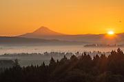 Sunrise over Mt. Hood & the Willamette Valley from Sokol Blosser vineyard, Dundee Hills, Willamette Valley, Oregon