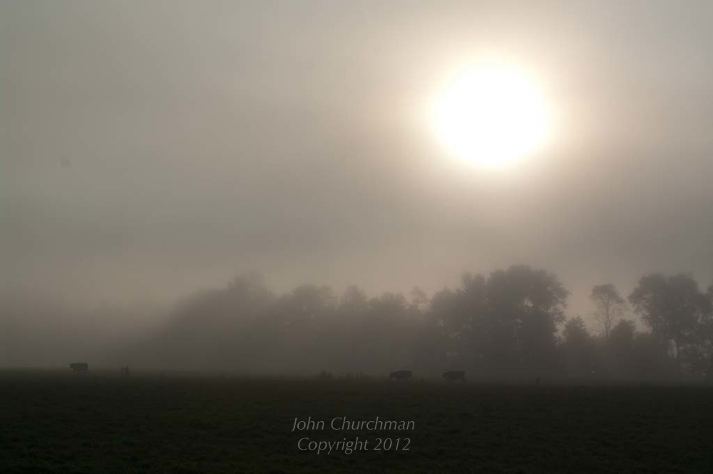 pale sun breaks through mist