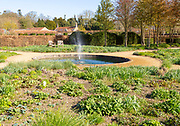 Garden designed by Piet Oudolf at Scampston Hall, Yorkshire, England, UK - Perennial Meadow pond