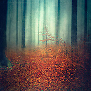 Abstraction of trees in misty bad weather<br /> Kaiser-Wilhelm Hain, Wuppertal<br /> Licenses:<br /> http://www.trevillion.com/search/preview/misty-forest-in-autumn/0_00066079.html