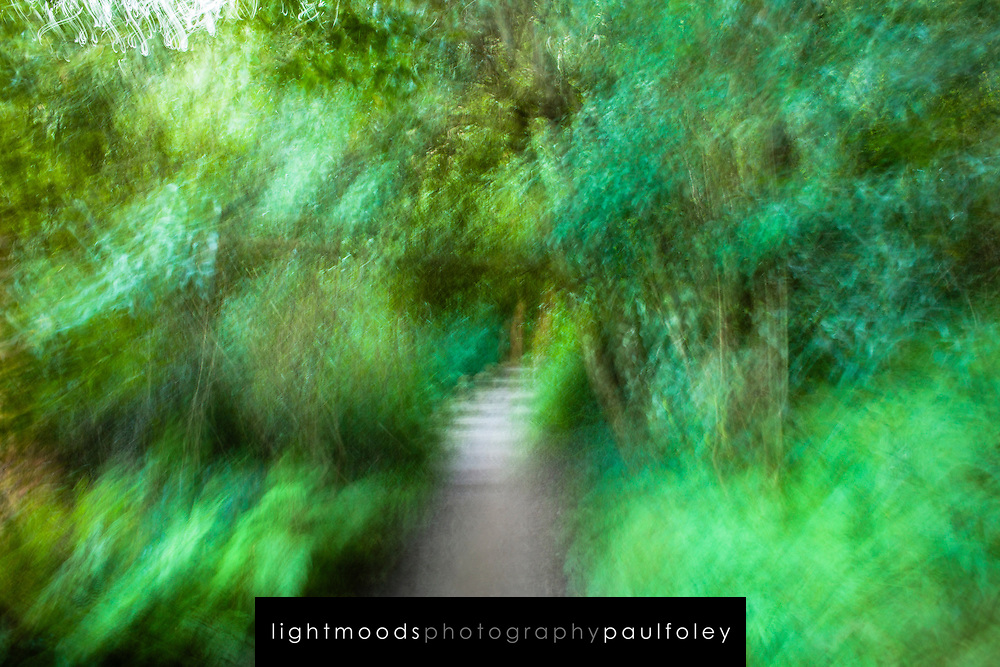 Walking along a bush path with blurred vision. Sydney, Australia.