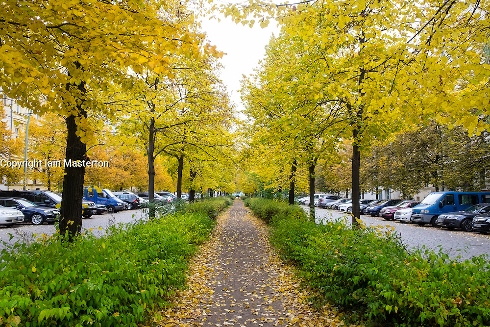 Autumn colours on trees along footpath on Metzer Strasse in Prenzlauer Berg in Berlin Germany