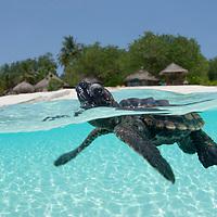 Maldives - The Underwater Kingdom