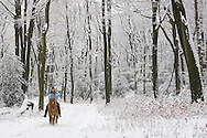 Europe, Germany, North Rhine-Westphalia, winter in a forest at the Ruhrhoehenweg in the Ardey mountains near Wetter, rider.....Europa, Deutschland, Nordrhein-Westfalen, Winter im Wald am Ruhrhoehenweg im Ardeygebirge bei Wetter, Reiterin.....[For each usage of my images the General Terms and Conditions are mandatory.]