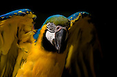 07 Parrots and Parakeets from around the World