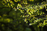 Leaves on Tree Branches