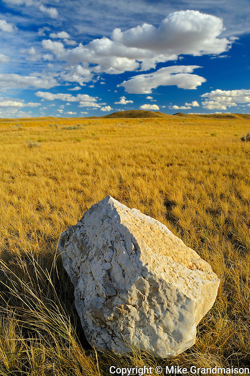 Bison rubbing stone on Canadian prairie grasslands  (West Block) <br /> Grasslands National Park<br /> Saskatchewan<br /> Canada