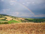 Tuscan Wish