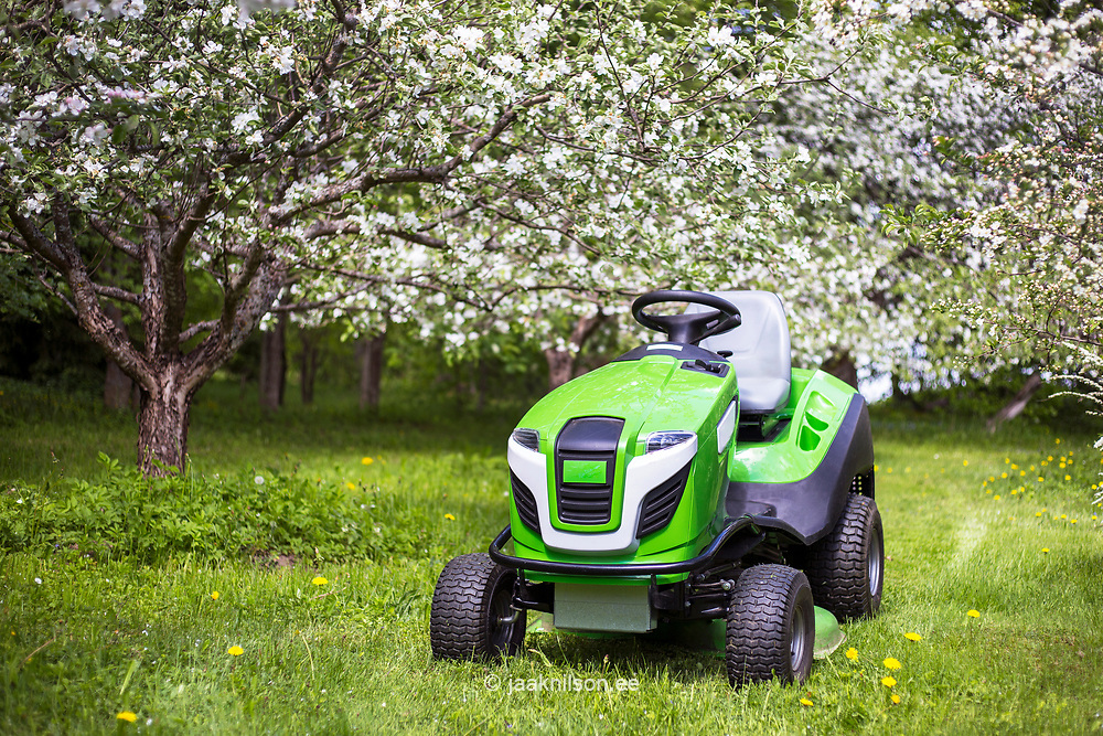 Riding mower, mowing grass in yard, tractor. Apple tree, bloom, garden.