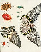 hand painted butterfly details from Miscellanea austriaca ad botanicam, chemiam, et historiam naturalem spectantia, cum figuris partim coloratis. Vol. II  by Nicolai Josephi Jacquin Published 1781. Figure 5