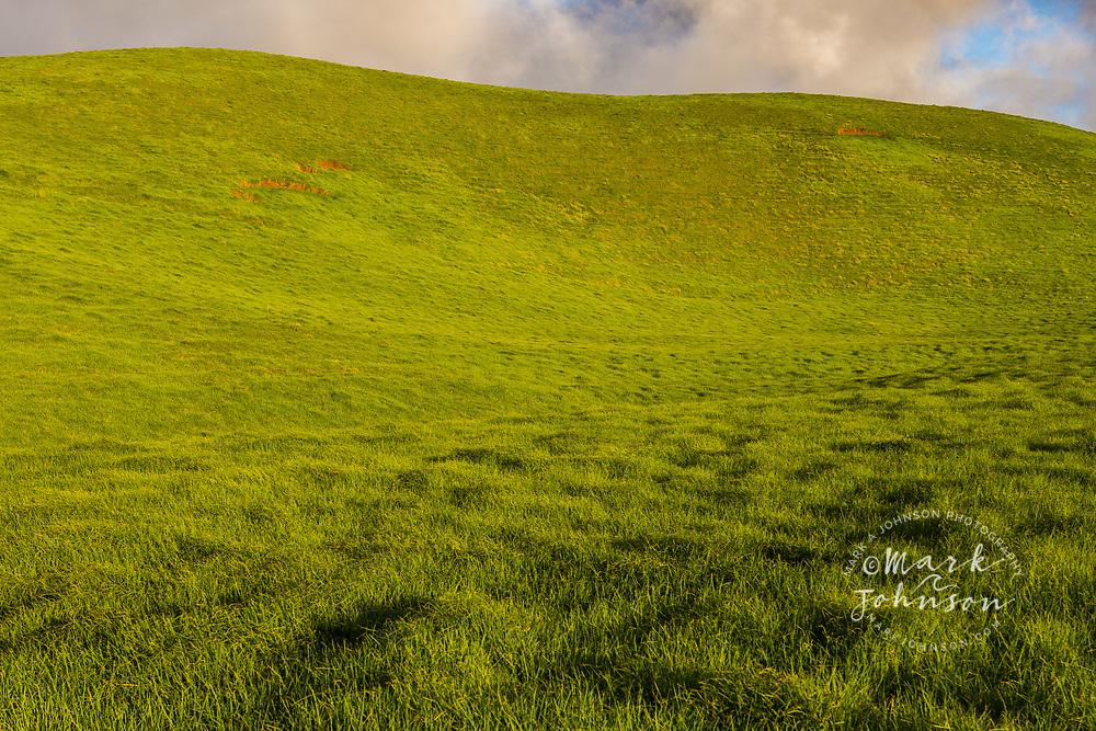 Lush pasture land, Waimea, Big Island, Hawaii