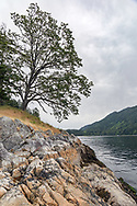 Garry Oak (Quercus garryana) tree and Burgoyne Bay from Daffodil Point.  This tree grows along the shore at Daffodil Point in Burgoyne Bay Provincial Park on Salt Spring Island, British Columbia, Canada