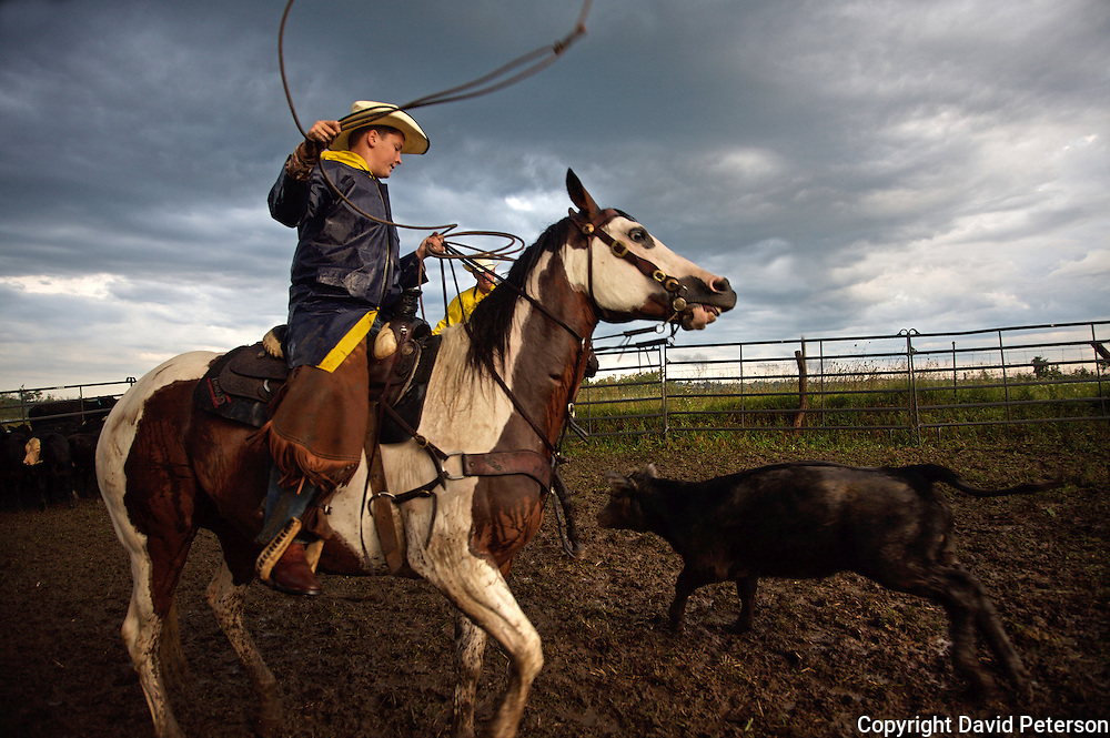 Young cowboy Wyatt Flattery tries to rope a calf on the Bar B ranch near Albia, Iowa, during a bi-annual cattle roundup.  During the event calves are gathered for vaccinations,  branding, the implant of growth stimulants, and in some cases, castration.  After a morning rain, muddy conditions made the task more difficult.  Ranch owner Catherine Bay runs the operation with a herd of over 2,000 cattle.