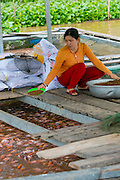 Tilapia Farm, Aquaculture, Mekong River, Vietnam, Asia