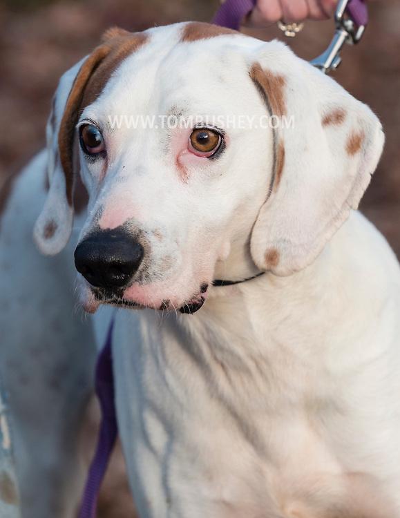 Middletown, New York - Dog portrait at Grateful Dogs on  Nov. 27, 2016.