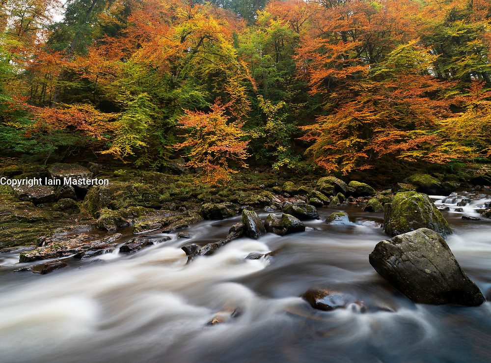 Spectacular autumn colours at The Hermitage a famous beauty spot near Dunkeld in Perthshire. Pictured is the River Braan.