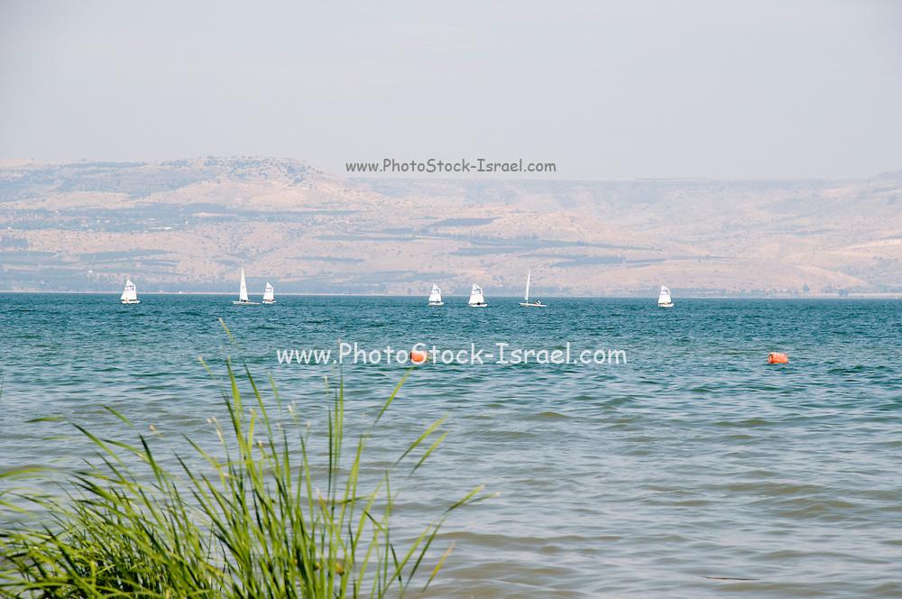 Israel, sail boats on Sea of Galilee May 2009