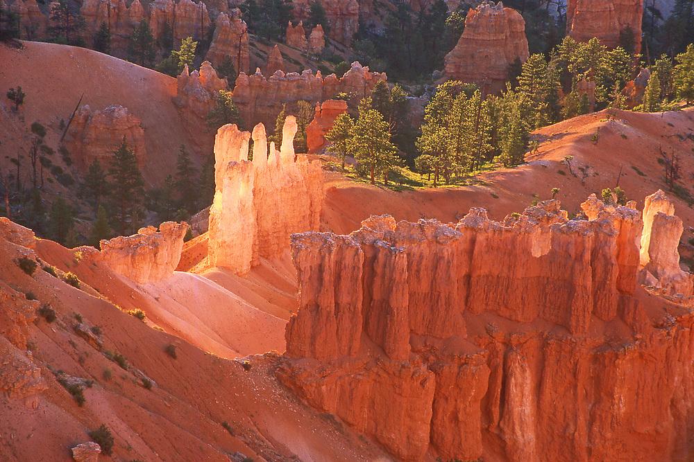 Bryce Canyon National Park, Southern Utah, USA