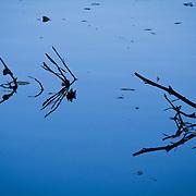 Indigo solitude