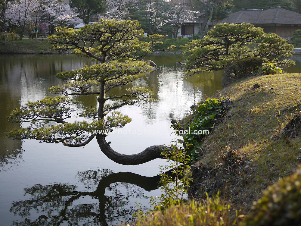 Japan, Honshu, Hiroshima Japanese Garden in spring bloom