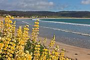 Porpoise Bay, Catlins, New Zealand