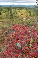 Herbstfarben im Riisitunturi Nationalpark