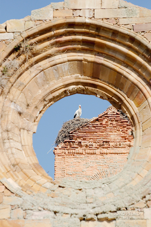 Stork ay the nest on the top of the ruins of the Santa María de Moreruela monastery.
