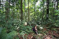 A woman hiking in rainforest in Taman Negara National Park, Malaysia..