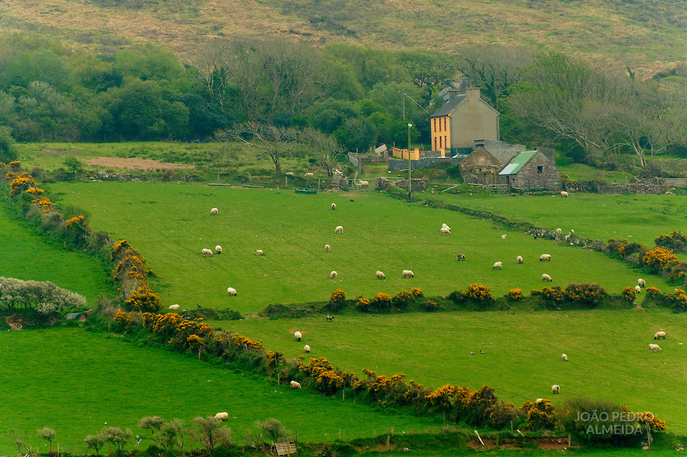 Countryside scene at Western Ireland