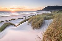 Dunes and dunegrass at sunset. Nehalem State Park, Oregon