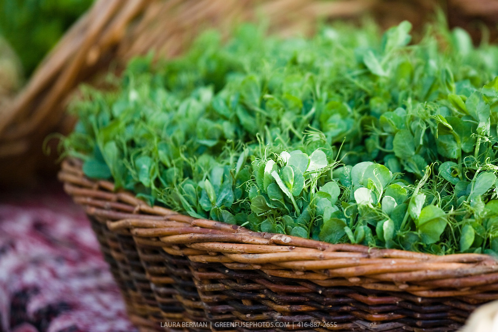 Fresh young pea shoots in a basket at a farmers' market..