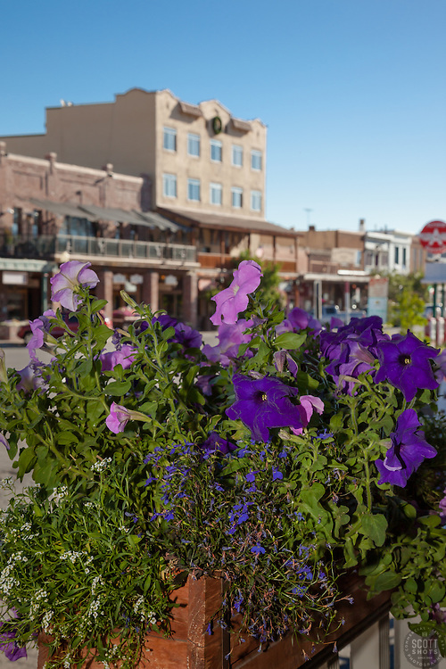 """Flowers in Downtown Truckee 1"" - These flowers and old buildings were photographed along commercial row in historic Downtown Truckee, California."