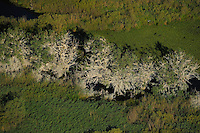 Cormorant colonies, Phalacrocorax carbo, Aerials over the Danube delta rewilding area, Romania