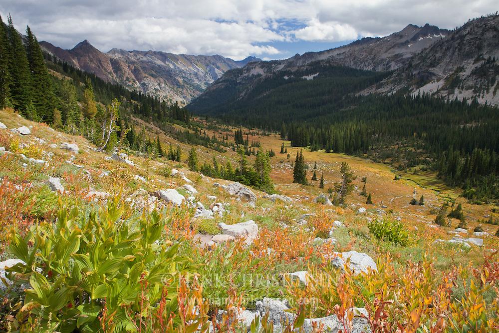 False hellebore fills the meadows of Eagle Creek Canyon, Eagle Cap Wilderness, Oregon